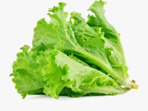 iceberg lettuce seed