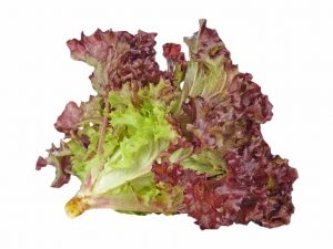 red-coral-lettuce - grab2deal