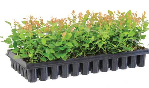 Seedling tray - grab2deal