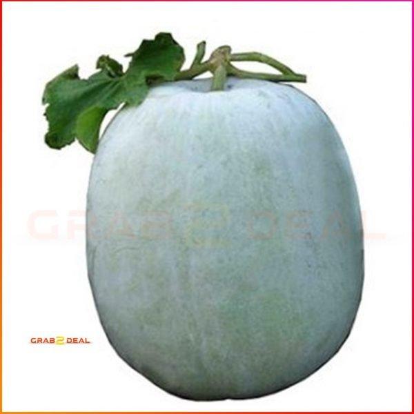 Ash gourd- GRAB2DEAL
