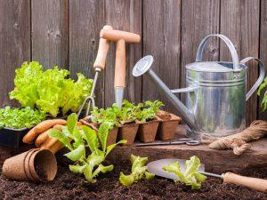 combo pack gardening
