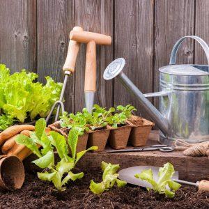 combo pack seeds & tools kit