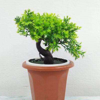 Plant - Grab2deal